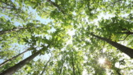 Tree canopy of Gallery in the Garden and the sunlight