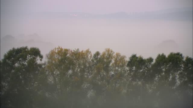 MS HA Tree canopy peeking up above blanket of fog / Marburg, Germany