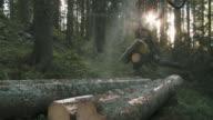 MS Tree cutting machine sawing tree in forest / Pokljuka, Triglav National Park, Slovenia
