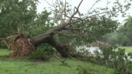 Tree felled by strong winds of cyclone Carlos in Darwin / AUDIO