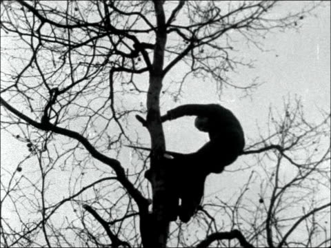 Tree felling in Birdcage Walk ENGLAND London Birdcage Walk EXT MS tree being uprooted by winch on back of lorry / GV CU man up tree sawing off...