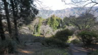 Tree forest view in Hodosan mountain, Chichibu