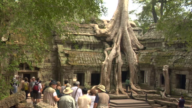 ZI Tree growing over structure at Ta Prohm Temple / Cambodia