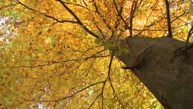 HD: Tree in autumn