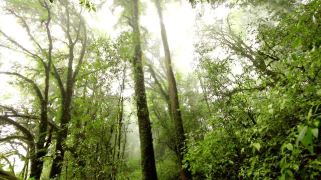 tree in deep tropical rainforest