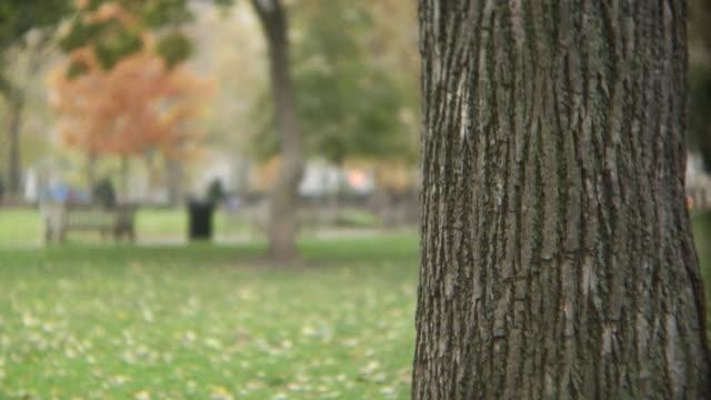 Tree in Rittenhouse Park: Autumn