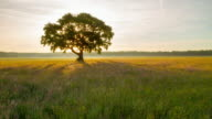 T/L Tree in the meadow at sunrise