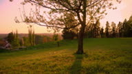 Tree in the meadow at sunset
