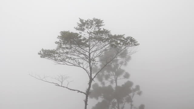 Tree in the mist.