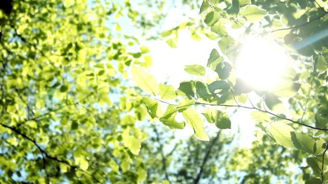 Baum Blätter HD 1080