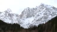 WS Tree line under snow covering mountain in distance / Bohinj, Triglav, Slovenia