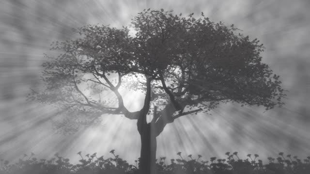 Tree of Light in the fog