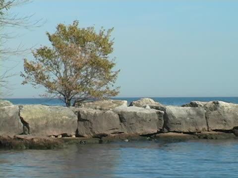 Tree on rocky peninsula