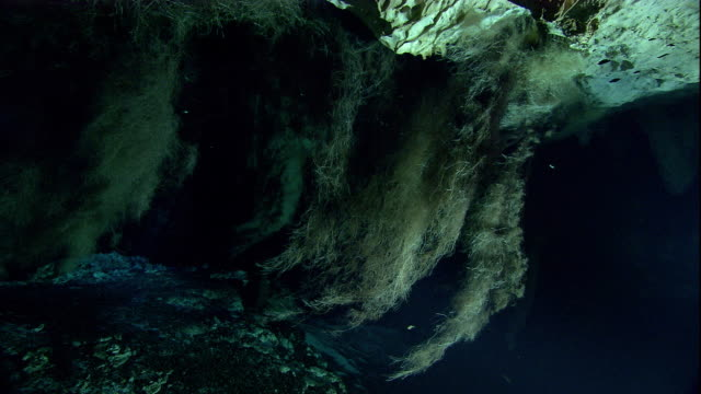 Tree roots grow down into a flooded cenote cave on the Yucatan in Mexico. Available in HD.