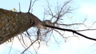 Tree spinning