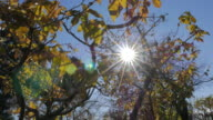 Tree top in autumn with sunlight