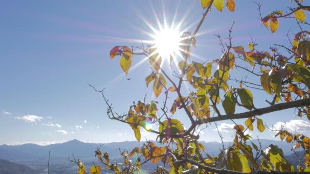 Tree top with bright sunlight, Chichibu