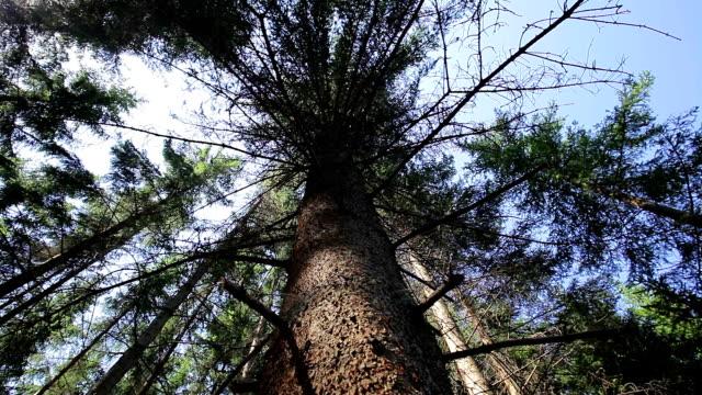 Boomtoppen In het woud