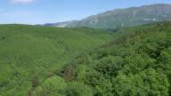 AERIAL Baumkronen eines weitläufigen, grünen Wald