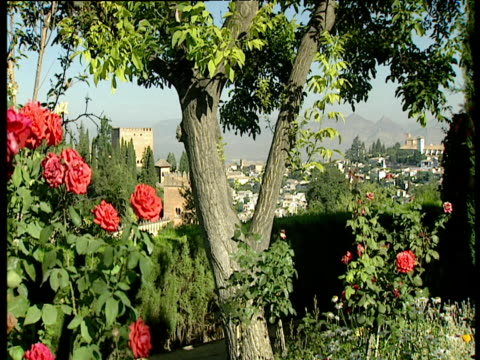 Tree trunk and pink roses in garden old fort and town in background Granada
