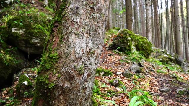 Tree Trunk; Dolly Shot