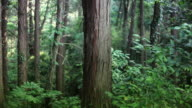 Tree trunk in deep forest