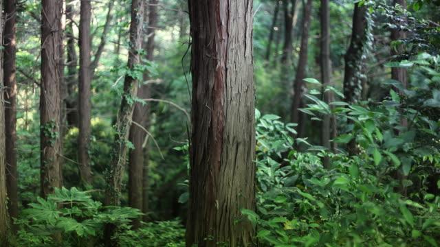 Tronco d'albero nella foresta profonda