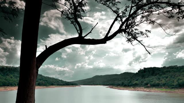 Baum Wasserlauf Mountain Zeitraffer (HDR)