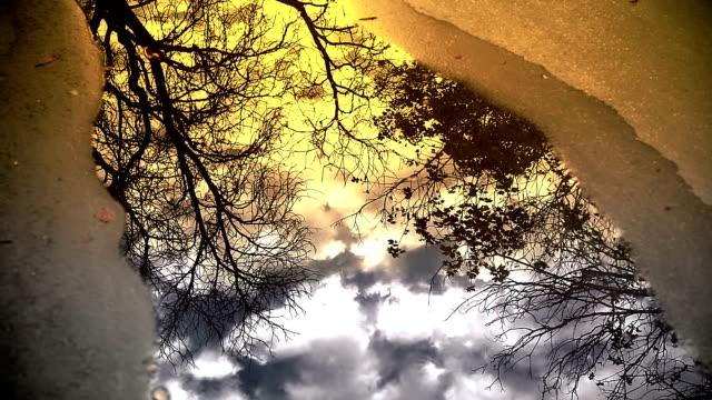 HD: Bäume und Wolken in eine Pfütze