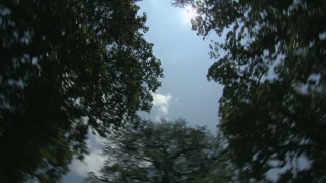 DS Trees circling around blue sky / Columbia, South Carolina, United States