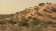 Trees cover a sandy hillside in a desert.