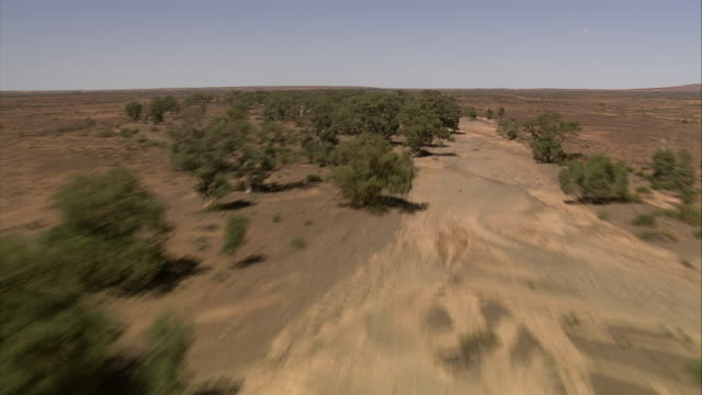 Trees grow on a dry riverbed in an outback flood plain of Queensland, Australia. Available in HD.