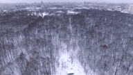 Trees in a winter park - aerial view