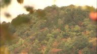 Trees in autumn colors cover a hillside.