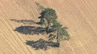 MS AERIAL DS Trees in field / Picardy, France