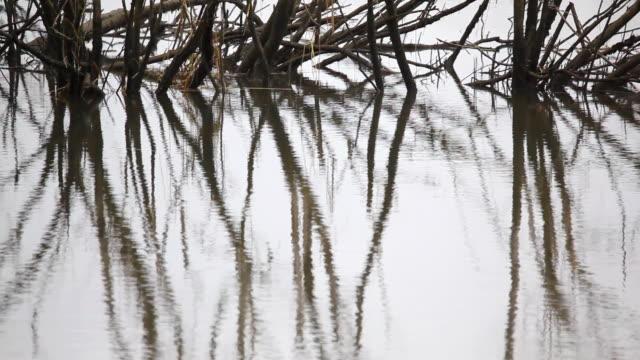 Alberi in stagno riflesso d'acqua increspature