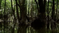 Trees in the amazon river