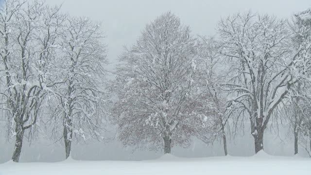 HD: Trees in winter