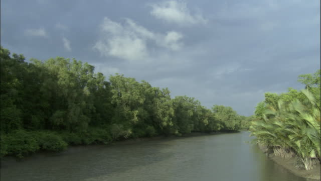 Trees line both sides of a river. Available in HD.