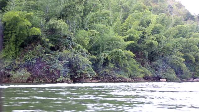 HD : Alberi vicino al fiume