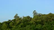 Bäume auf Himmel