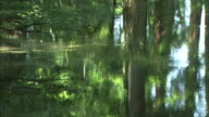 Trees reflect on the surface of a shady pond.