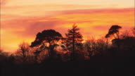 Trees slihouetted at sunset, Conwy, Wales, UK