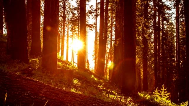 Trees Sunset