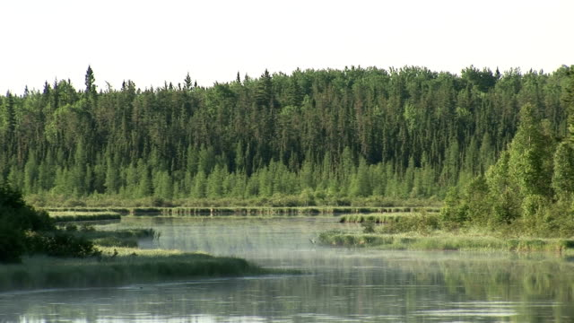 Trees surround a lake in the northern wilderness, Canada. Available in HD.