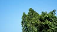 Bäume schwanken im wind