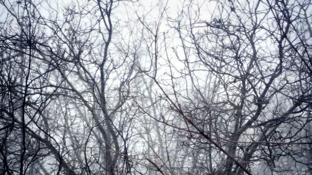 Alberi sotto la neve in inverno