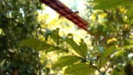 Treetop canopy footbridge