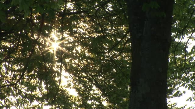 HD: Baumkrone in den Sonnenuntergang