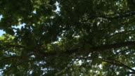 HD CRANE: Treetop